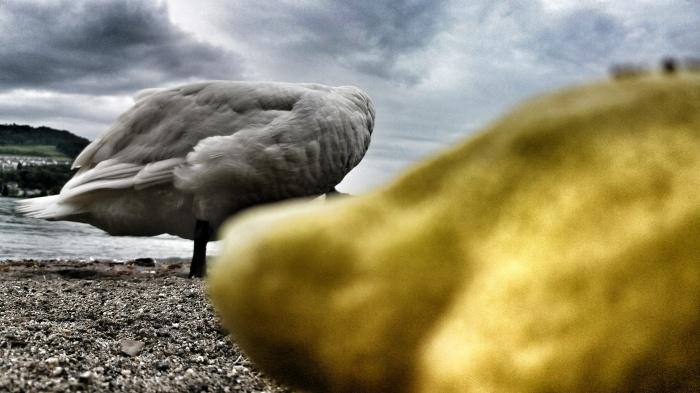 Andre SICHT, Artist, Director, Art Composer, Schweiz, Kunst, Zitrone, Schwan, Fotografie