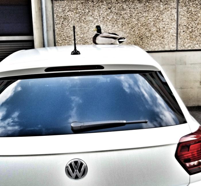 Andre SICHT Artist Creativ Director Fotografie Kolumne #Kunschtdrus Ente in der Stadt uaf dem Auto